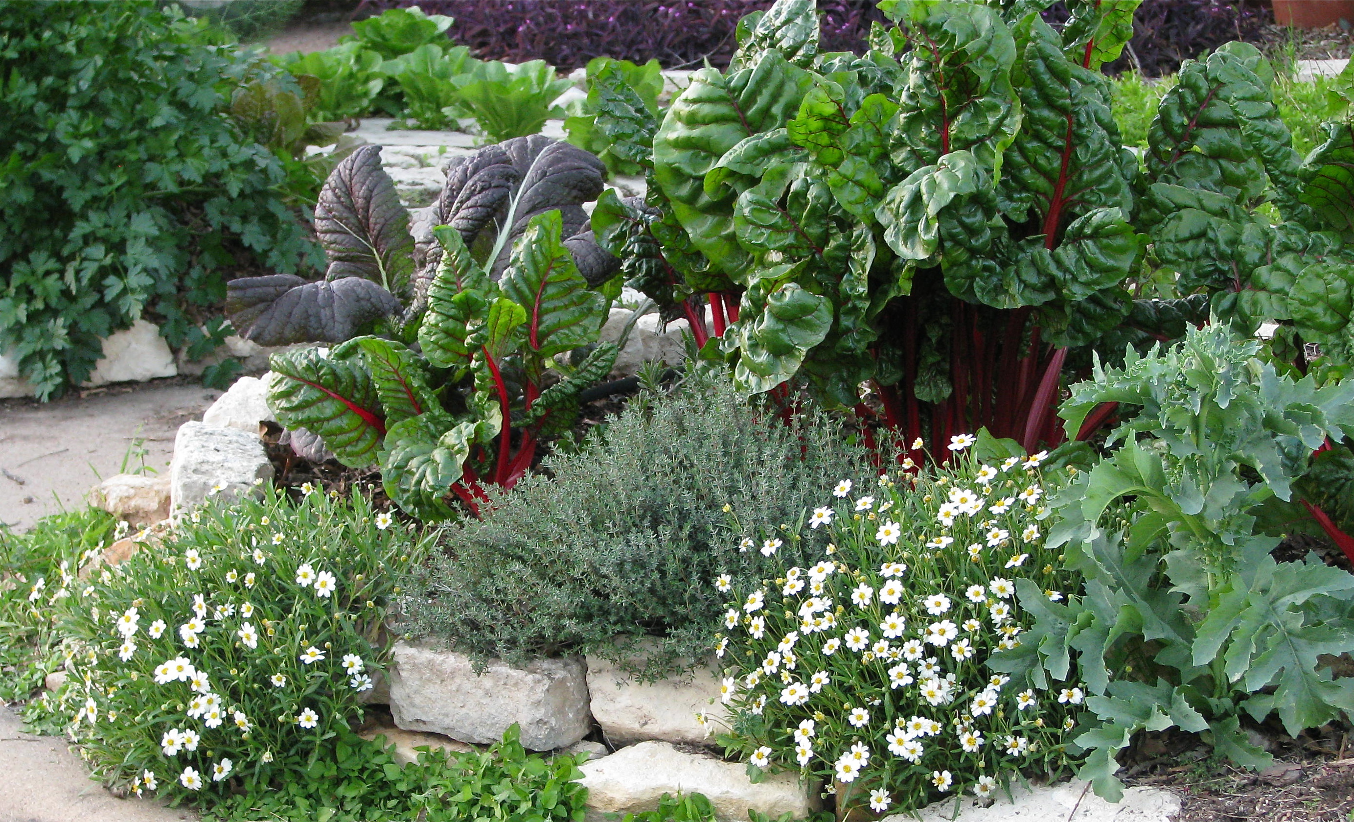 Ideas For Edible Landscaping PDF